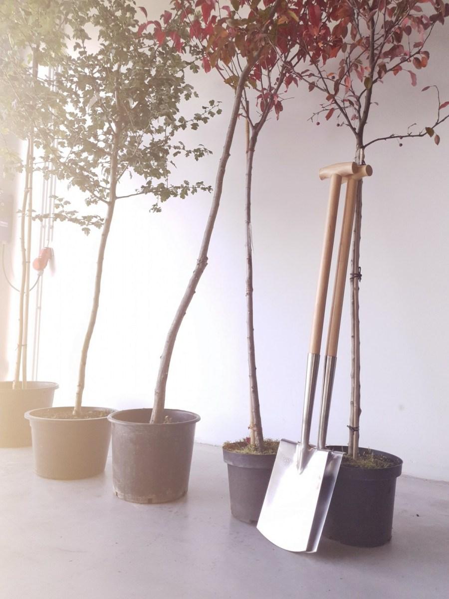 Bäume pflanzen in Großlöbichau - 20.09.2019