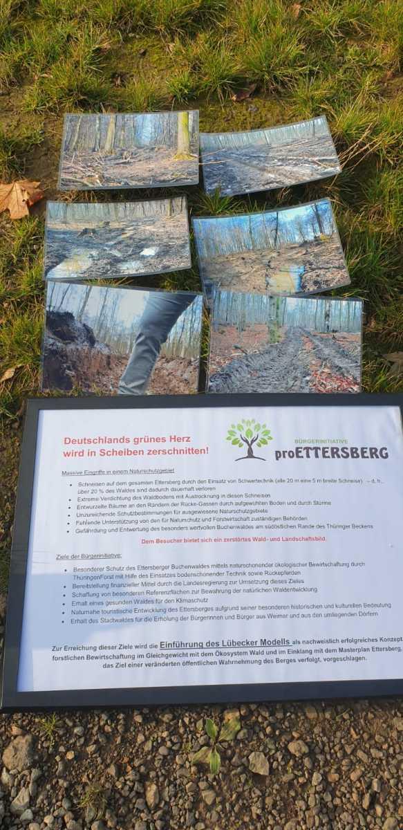 Bäume pflanzen in Weimar zusammen mit der FDP Weimar - 23.10.2019