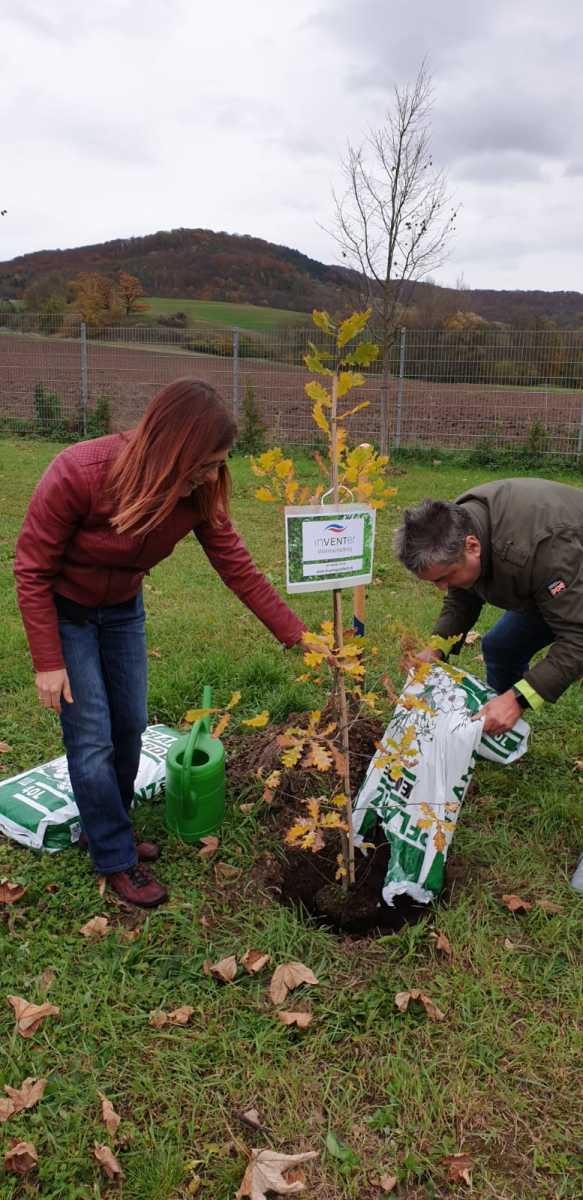 inVENTer pflanzt einer deutschen Eiche - 06.11.2019