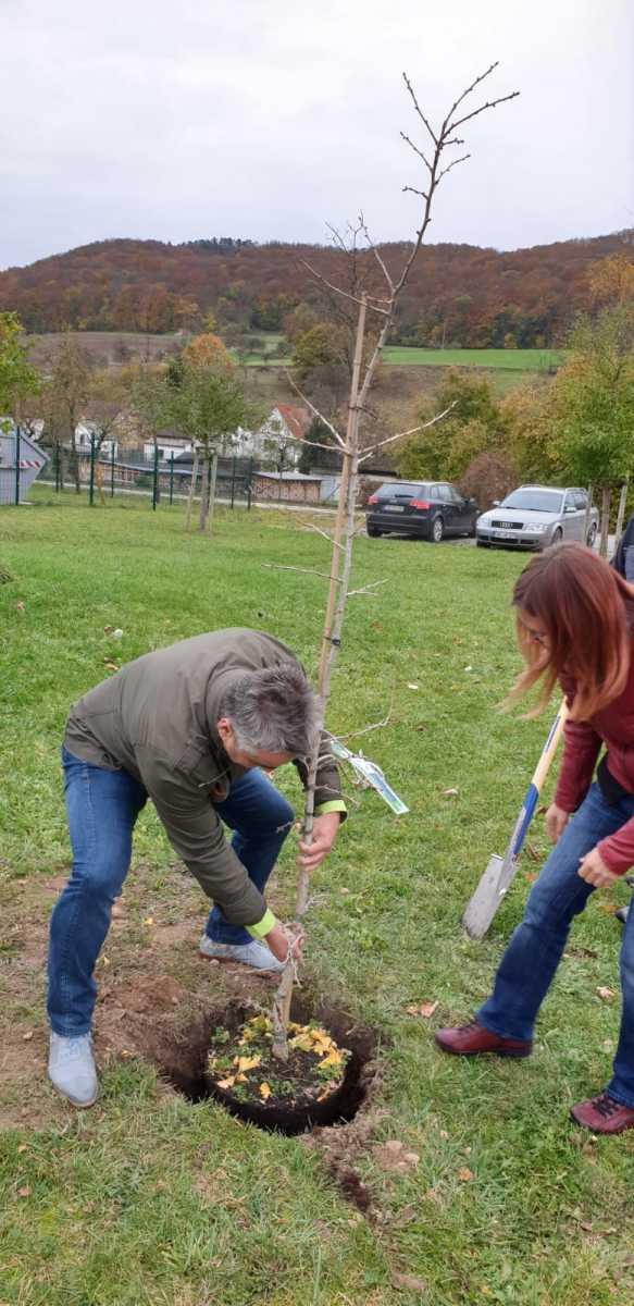 Ein Gingko-Baum wird von der IBA Jena gepflanzt - 06.11.2019