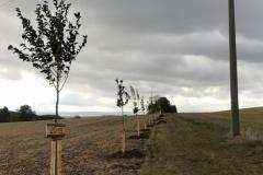 Pflanzung von 35 Bäumen von Doreen Ahrens - 03.10.2019