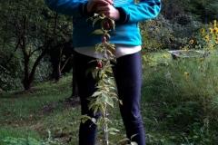 Kornellkirsche gepflanzt - 25.09.2019
