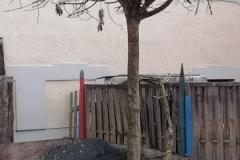 Robert Schwarz hat einen Kugelahorn gepflanzt- 19.10.2019