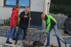 Pflanzen einer Schlammeiche bei Familie Nöhren - 17.10.2019