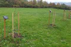 gemeinsames Bäume pflanzen in Bad Berka - 01.11.2019